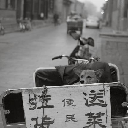 China fujifilm_0239